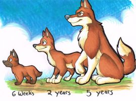 Rover Over The Years by EvilAmishWerewolf