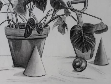Direct Observation Still Life by Rebecca-Petro