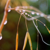 August Rain by OctodogPhotography