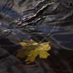 The Fall 2 by rici66