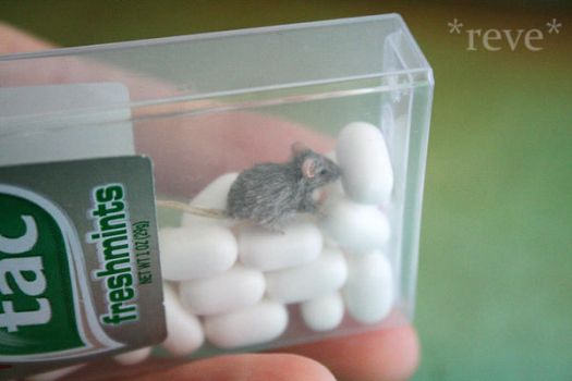 Need a nifty idea for mini pet carrier? by ReveMiniatures