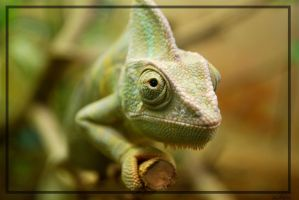 Chameleon by joestoes