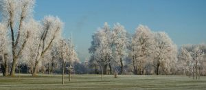 frosty trees by photographybypixie