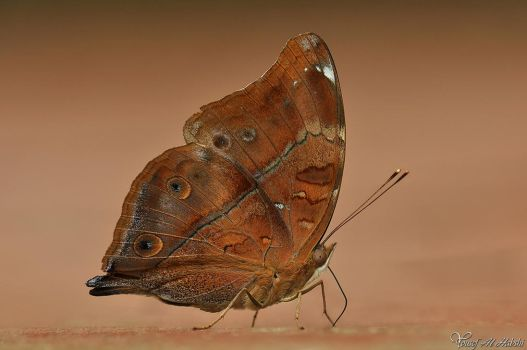 Autumn Leaf Butterfly by AlHabshi