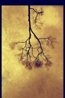 ::ROOttREE:: by mohdfikree