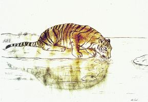 Drinking Tiger 2 - Coloured by Favenatig