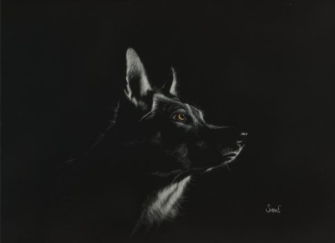 The Keen One - scratchboard by shonechacko