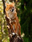 King Of the Hill by PictureByPali
