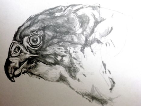 peregrine falcon study by lamelobo