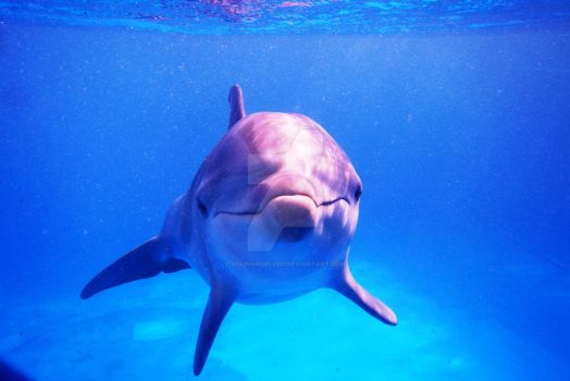 Baby Dolphin Hello by Dolphingrl1331