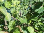 Nanners the Banana Spider by Lady-ALTernate
