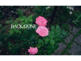 roses are red? by backatone