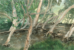 Paperbark Swamp by Dreagthe