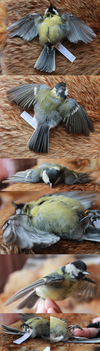 Great Tit Skin by CheeTaxi