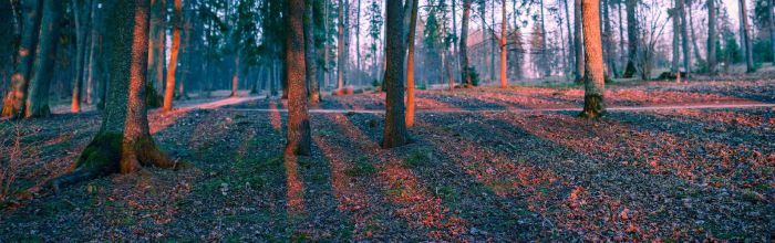 Woods panorama by puu4ux