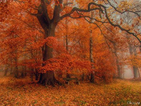 misty autumn III by Weissglut