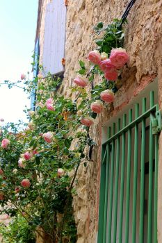 Provence 2012 9 by desireoffreedom