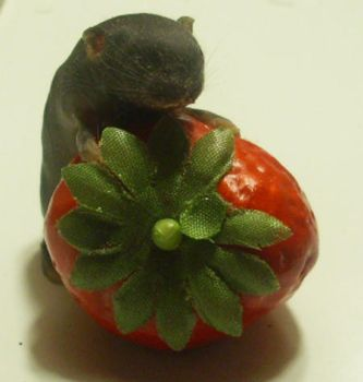 baby mouse taxidermy 6 by pandasnacks