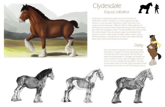 Orthographic Horse Studies by cuddleturtle
