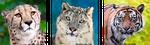 Colourful BIG CATS MUG by woxys