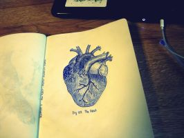 heart anatomical sketch by thisbeautifullmess