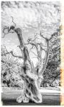 The Ghost Tree? by deepgrounduk