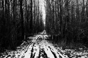 black and white forest by Inguan