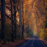 embrace of gold by ildiko-neer