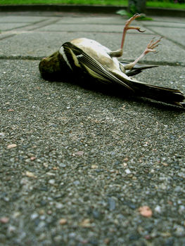 A dead bird. by Psychobabbles