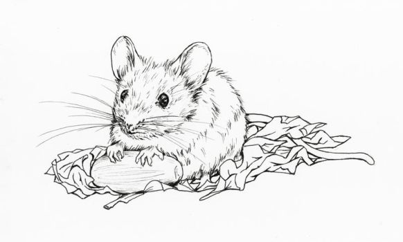 Little wood mouse by Adniv