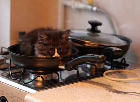 how to cook the cat by Hechicero