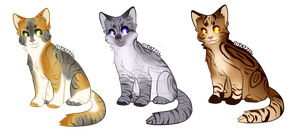 Cat Adopts || (Open) by BlizzardBrick