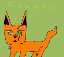 Q 2 by Ask-She-Firestar