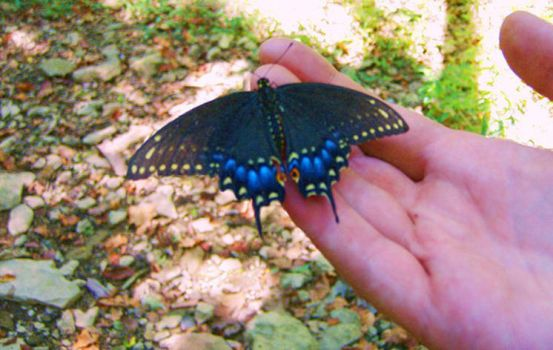 Butterfly in my hand by Nordicdog