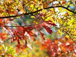 autumn leaves by MDGallery