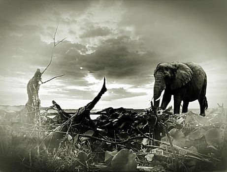 the old Elephant by poisen2014