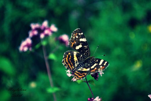 Butterflyyy by Sue-Brown