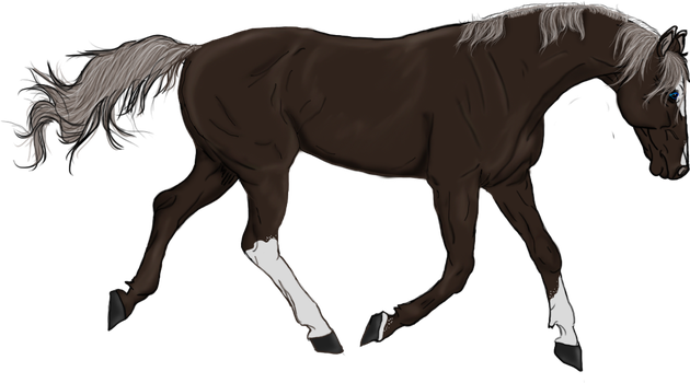 .:Liver Chestnut:. by Cowgirl867