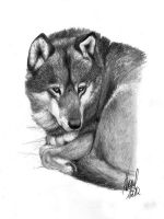 Gontscharow - Portrait of a wolf by antoniavogel