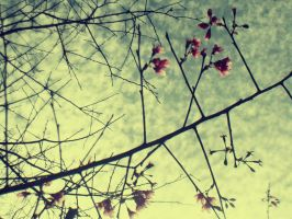 Winter then Spring... by cazt1811