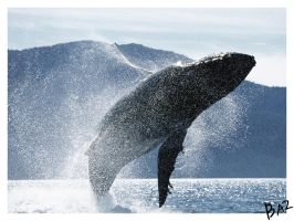 whale rider anthropology Cultural anthropology/caassessments from wikieducator  cultural anthropology jump to: navigation,  i alternate between whale rider and smoke signals,.