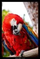 Macaw Parrot by Zer0s0phT