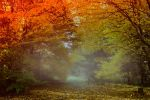 Autumn forest Stock 01 by Dezzan-stock
