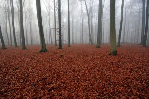 leaves on the ground by augenweide