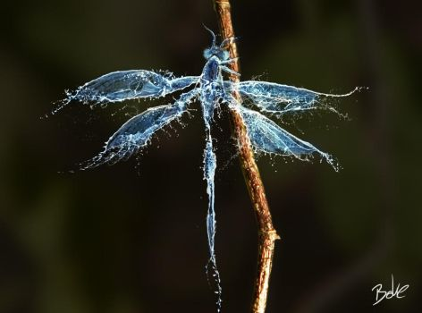 Water Dragonfly by B-O-K-E