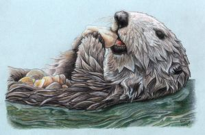 Sea Otter Snacktime by xfkirsten