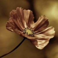 just a flower by julie-rc