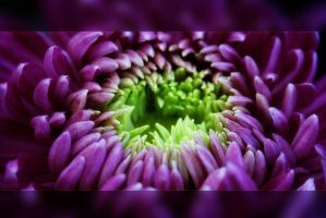 Macro 2 by TND-Photography