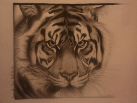 Tiger for Chris by Freezingforheat