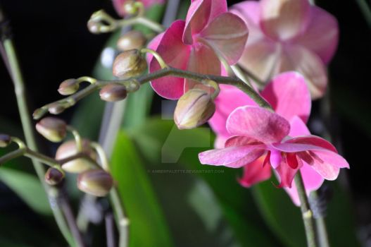 CBG 2012 Orchid Show 1 by AmberPalette